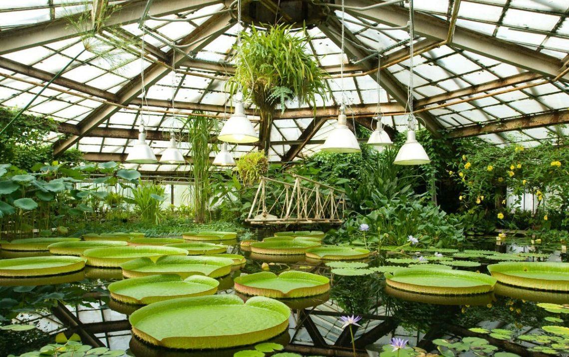 Ботанический музей