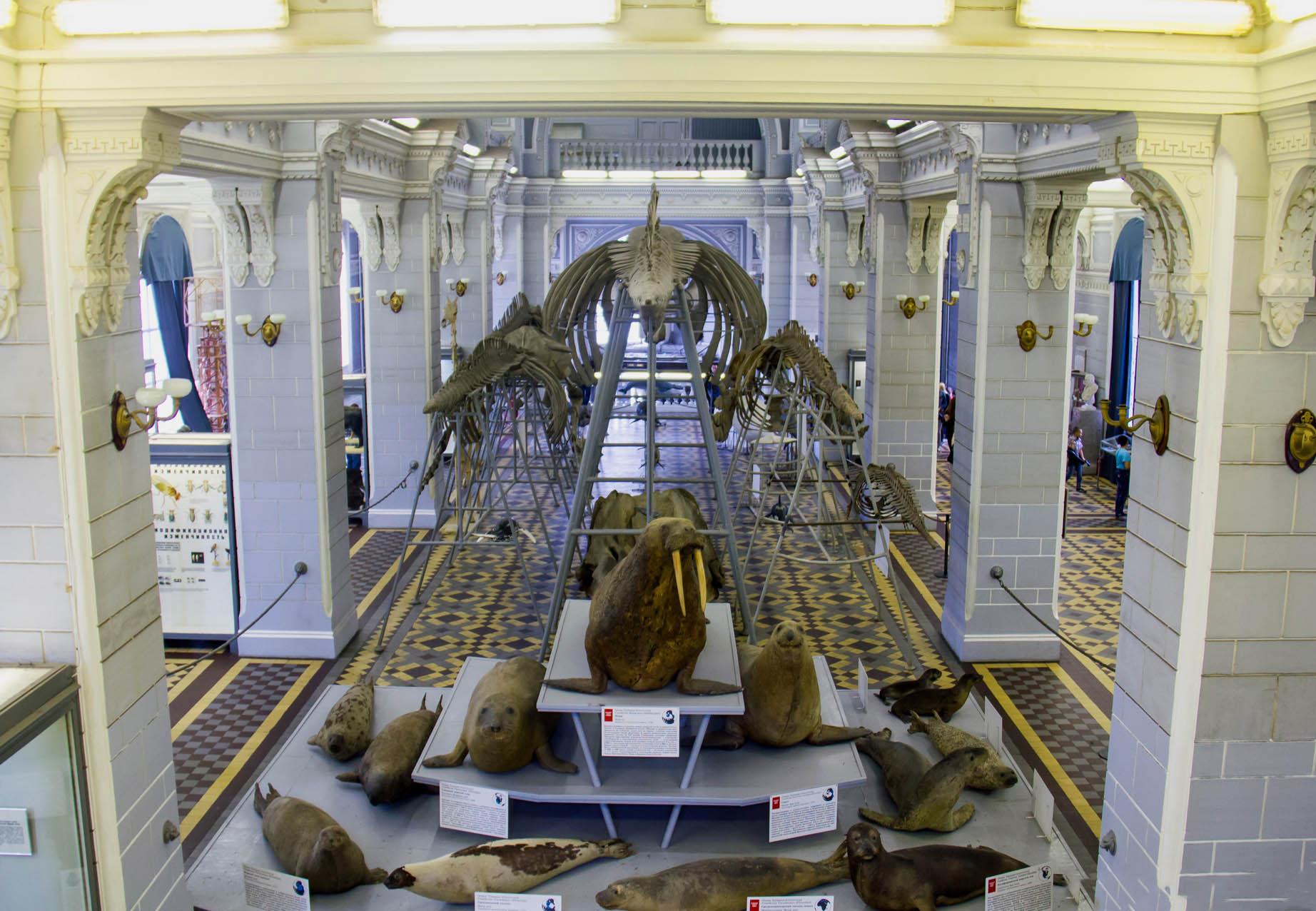 Зоологический музей в Петербурге