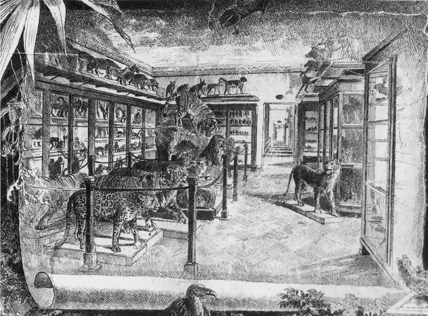 Экспозиция Зоологического музея - плаката А.Н.Шильдера. Конец XIX в.